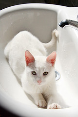 In the sink - by fofurasfelinas