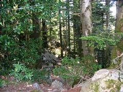Passage en forêt sur la trace vers Apaseu après Funtanella