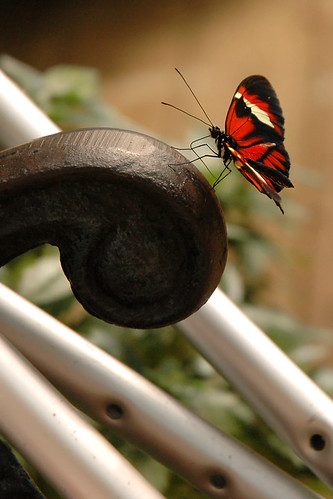 A red, white and black butterfly is standing on the very edge of a curly bench arm.  Arm-crutches are looped around the bench.