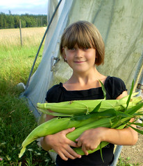 Rosenhill ~ Bella med majs (Bella with corn) - by Per Ola Wiberg ~ Powi
