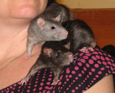 Chimay och Miso