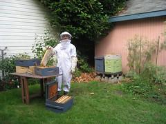 Beekeeping 2476