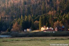 Mountain houses (Young Crazy Fool) Tags: houses house france mountains frankrijk bergen huis spar spruce vosges spruces huizen vogezen sparren lacderetournemer xonruplongemer