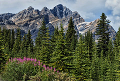 A September Moment in Banff National Park (Jeff Clow) Tags: banff albertacanada banffnationalpark icefieldsparkway canadianrockies