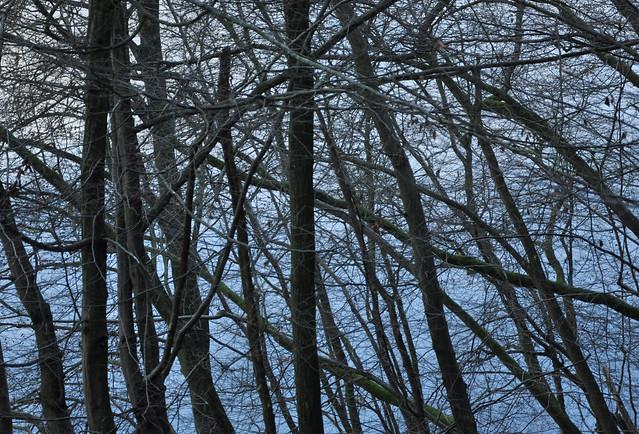 branchesandwater
