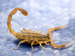 Scorpion (Anthony L. Hill) Tags: nikon d70 70300 tamaron
