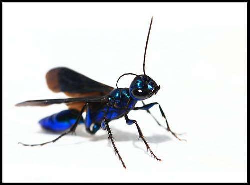 Blue Jacket Insect | Outdoor Jacket