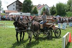 IMG_8658.jpg (roadtek) Tags: donkey esel