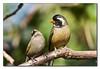 _MG_8180b (eduardopeyras) Tags: bird nature argentina birds fauna buenosaires aves pajaros pajaro sudamerica birdwatcher blueribbonwinner animalkingdomelite anawesomeshot buenosairescentral avianexcellence picturepages naturewatcher