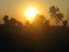 From the window of train (Salman Shaikh's Photography) Tags: pakistan sunset sky sun tree green clouds train landscape railway rainy lovely punjab karachi sind vally paki