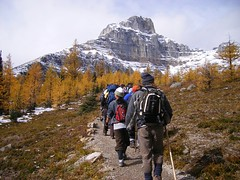 the tour group (jensouthern) Tags: valley larch