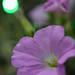 時節前の開花