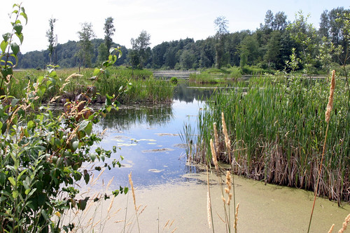 Cheam Lake Wetlands