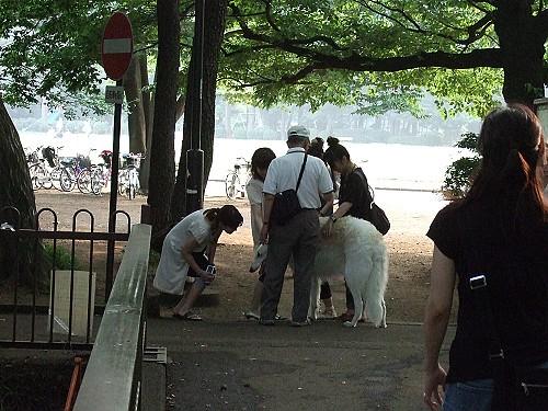 20070628公園溜狗歐吉桑