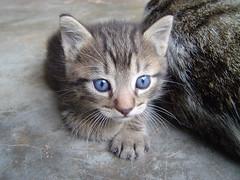 gatico (Betto) Tags: cats cat kitten pussy kitty kittens gatos gato kitties gata kittie gatito pdpnw