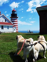 Easternmost Pugs in the Continental United States (gina64) Tags: vacation lighthouse dogs maine mickey pugs marty westquoddyhead easternmost lubecmaine westquoddylight impressedbeauty easternmostpoint