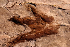 Dinosaur Tracks by Dave Boyer