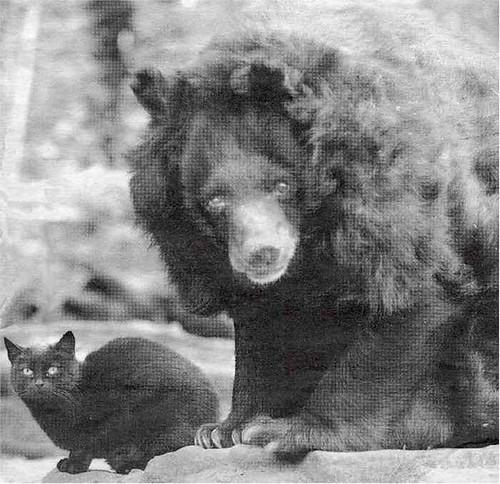 bear_cat