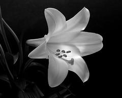 Easter Flower (lroberg) Tags: saveearth