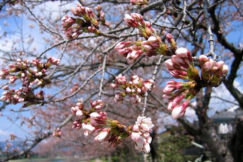 kyoto_spring