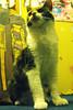 kui kui (alterna ►) Tags: chile santiago natalia fotografia diseño ilustracion caceres alterna alternativa superboba alternaboba