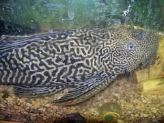 A Maze-ing fish