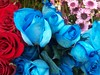 flores frias (catheo) Tags: flowers roses flores colores rosas rojas azules teñidas