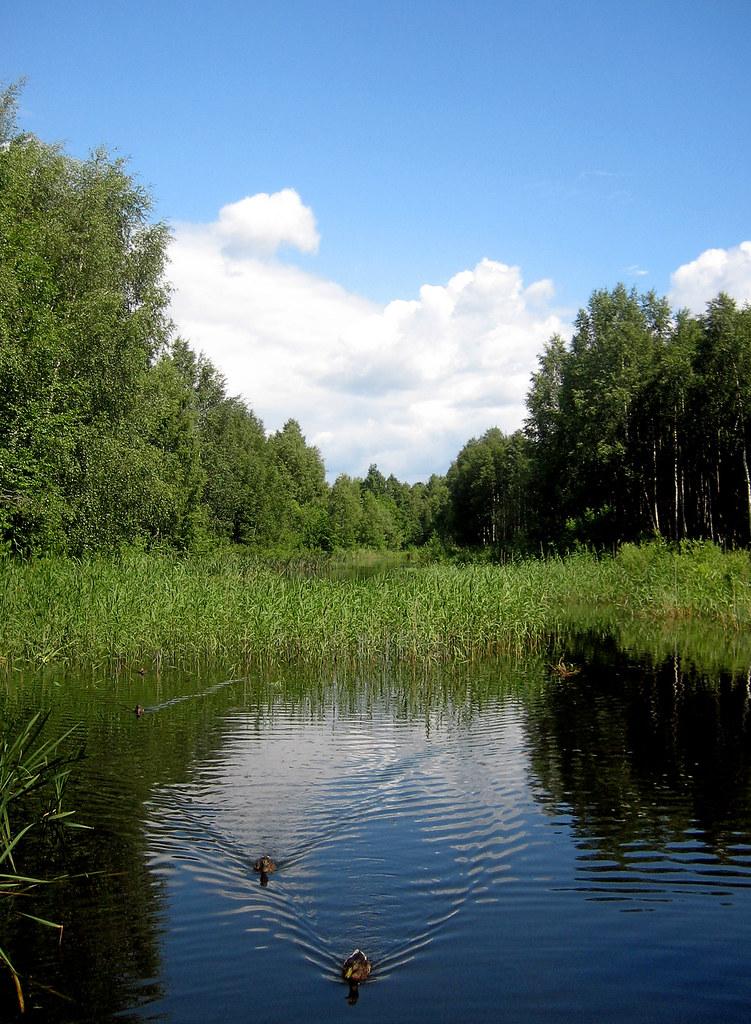 Summer  View
