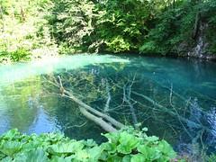 Fallen tree (29cm) Tags: park travel summer lake nature water europe outdoor croatia jul 06 plitvice 29cm