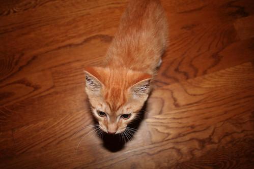 Milo matches the floor