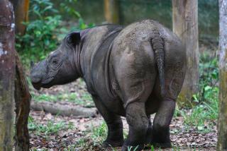 rhino back