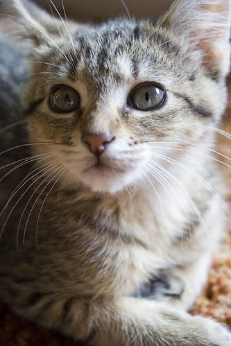 Itty Bitty Kitty. Itty Bitty Kitty