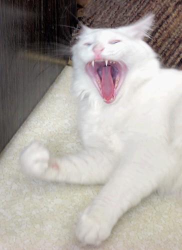 Gato fantasma asesino