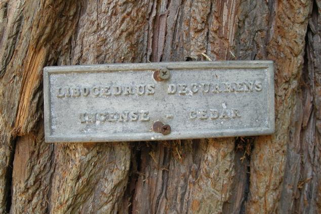 100107_cedar_tree_sign_635x423