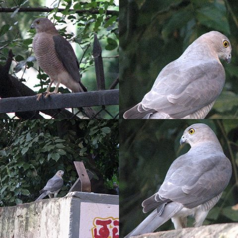 shikra collage sept 07 casa ansal