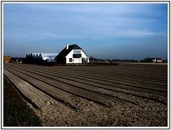 Bollenveld (Theo Kelderman) Tags: landschap bollenveld lisselandschappen