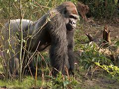Disney's Animal Kingdom : Pangani Trail : December 31, 2008