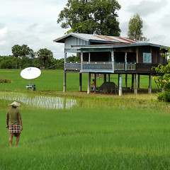 Home before supper and satellite television (B℮n) Tags: buffalo topf50 lowlands palmtrees dailylife agriculture laos woodenhouse homesweethome paddyfields satellitedish countrylife ploughman buffel paceoflife donkhong 50faves ricefarming bamboohat satellitetelevision woodenhouseonstilts walkinghomeafterwork wetricefields dailylifeinlaos huisoppalen 4000islandsinthemekong menplough menplow exploringdonkhongbybike farminginlaos ricecutivation greenricefields sonandbuffalo homesbuiltonstilts houseonstiltsorpiles thefloodplainsofthemekongriver farmathome backatsuppertime puddlericefields homebeforedinner widerangeofchannels housewithsatellitedish homebeforesupper