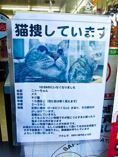 Se busca gato class=