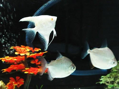 IMG_0785  Aquarium