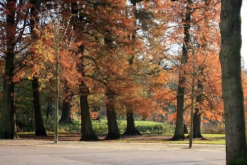 Vondelpark - outono - autumn - herfst