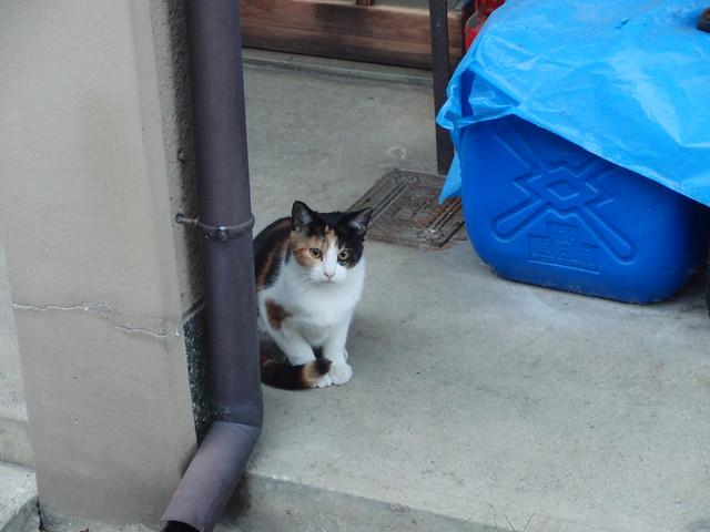 Today's Cat@2010-11-18