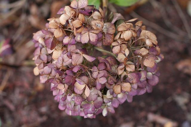 Flower ISO 1600