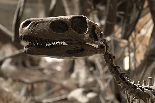 various bones 4