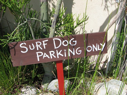 Surfer Dogs park here
