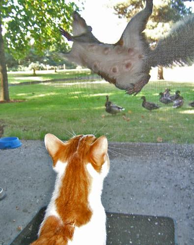 Sex of squirrel   squirrels   Flickr