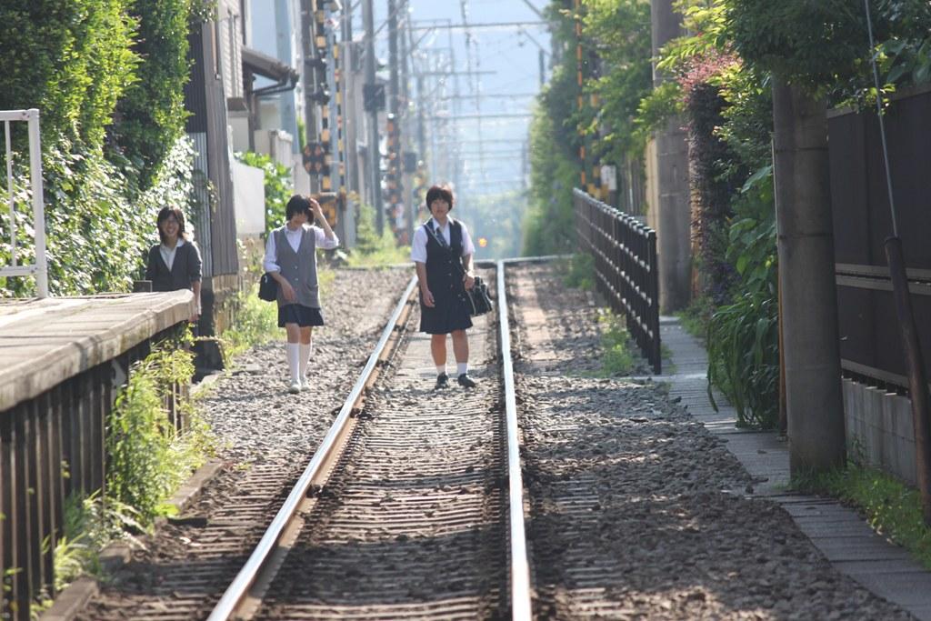 A Japan photo No.164:Hydrangea Walk(AJISAI) in Kamakura