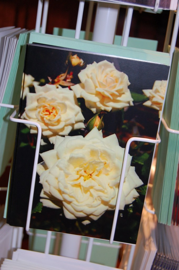 Greeting Cards - White Roses