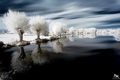 Reflets d'IR! {EXPLORED - FP} ( David.Keochkerian ) Tags: red snow france reflection tree ir rouge photo nikon d70 image explore reflet infrared modified neige arbre infra picardie tang somme infrarouge fouilloy keochkerian