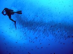 dive buddy, shot by flickr member leafbug